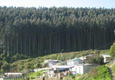 laraquete-forestal.jpg